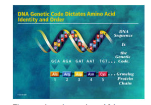 Photo courtesy U.S. Department of Energy Human Genome Program